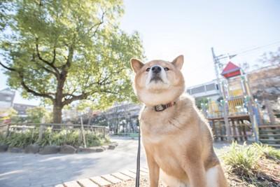 空気中のにおいを嗅ぐ犬