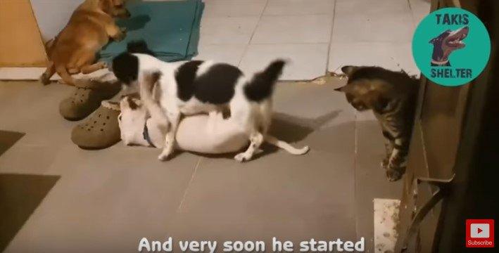 たわむれる犬たち