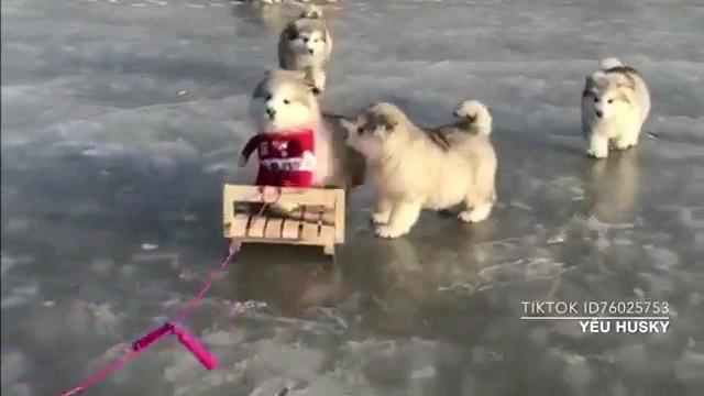 氷の上の子犬