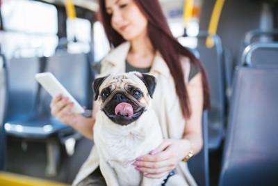 バスに乗り込む犬