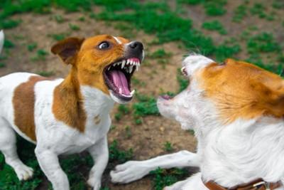 喧嘩する犬