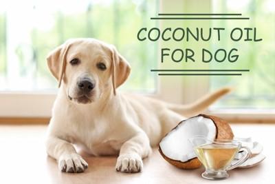 ココナッツオイルと子犬