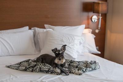 ベッドで待つ犬
