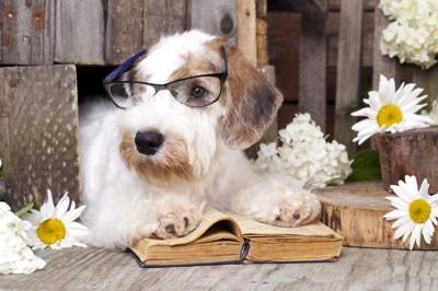 調べ物をしている犬