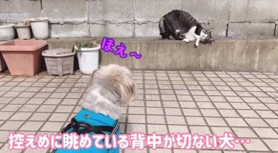 猫を見つめる犬