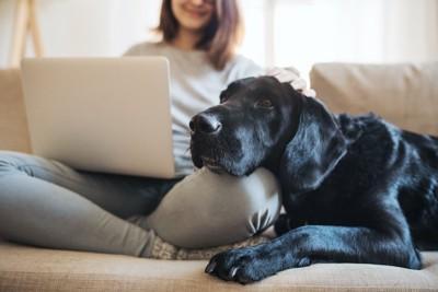 パソコンを見る飼い主の足にあごを乗せる犬