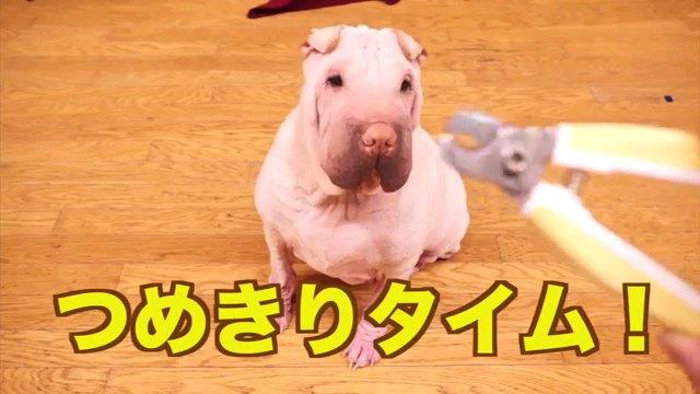つめきりタイム!~字幕