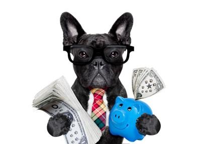 お金を持つ犬
