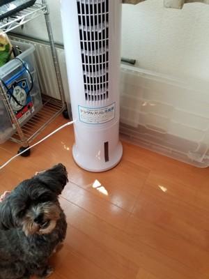 冷風扇と犬