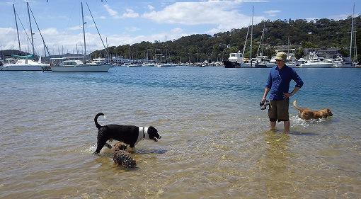 海で遊ぶ犬たち