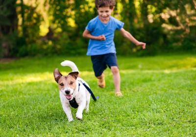 走るジャックラッセルテリアを追いかける子供