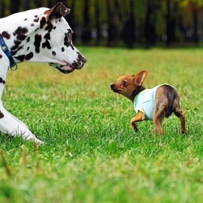 犬同士のにらみ合い