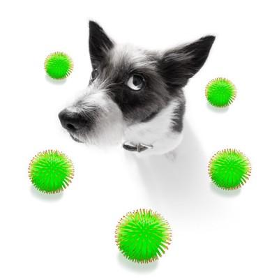 犬とウイルスのモデル図