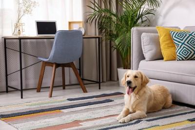 リビングのカーペットの上でくつろぐ犬
