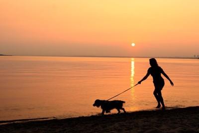 夕暮れのビーチを散歩する犬と女性