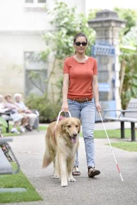 盲導犬と歩く女性、ゴールデン