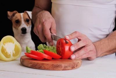 料理を後ろから見る犬