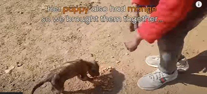 子犬もほごします