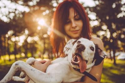 散歩中に女性に抱っこされる犬