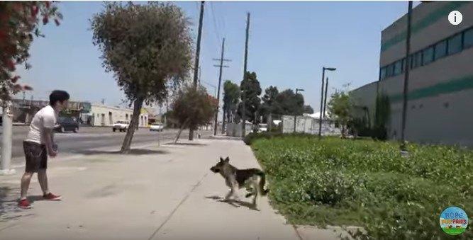 犬が道路にとび出さないように見張る人