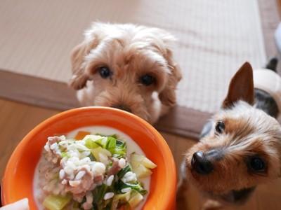 手作りごはんを持つ飼い主を見つめる二匹の犬