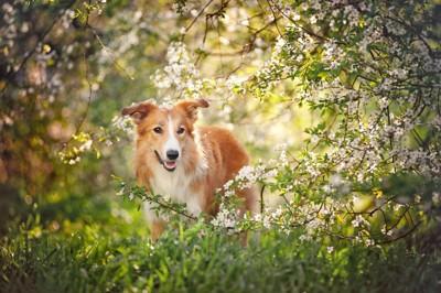 白い花と垂れ耳の犬