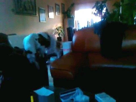 降りようとする犬