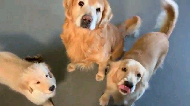 並ぶ三匹の犬