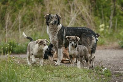 母犬と仔犬
