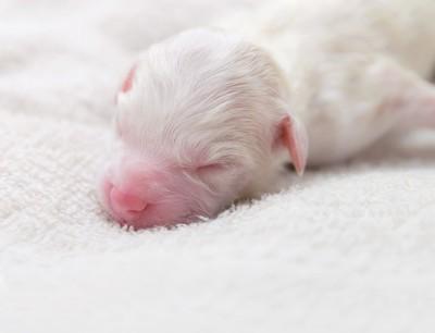 産まれたばかりの子犬