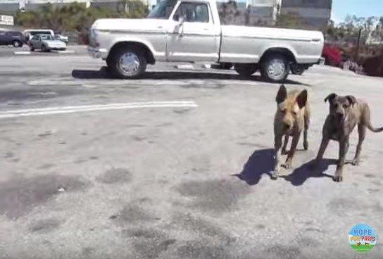 駐車場の親子