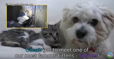 子猫と出会う