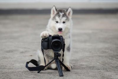 カメラと犬
