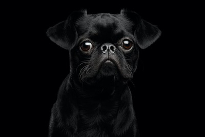 暗闇の中でこちらを見つめている犬