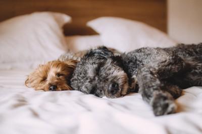 犬と早寝早起き