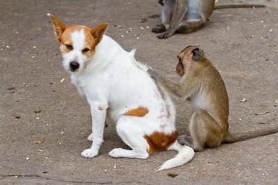 お猿に毛づくろいをしてもらっている犬
