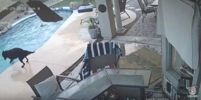 階段へ誘導しようとする犬