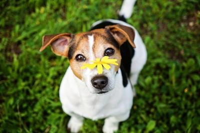 花をのせた犬