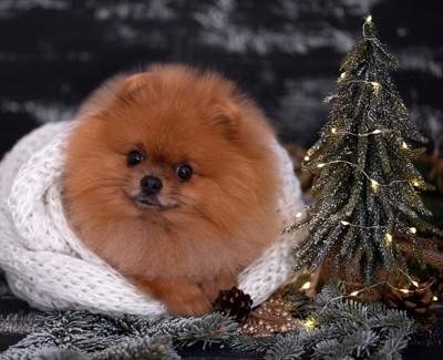 白いブランケットに包まれた犬