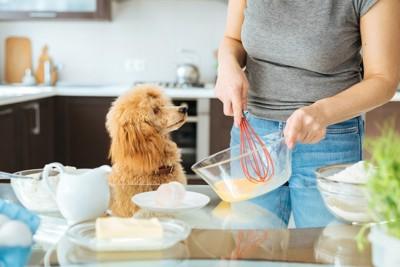 プリンを作る人と犬