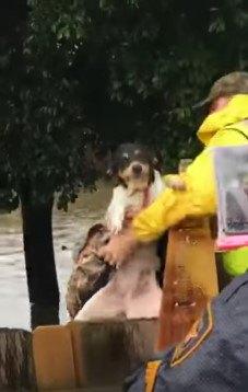 犬を持ち上げて塀の外へ出す