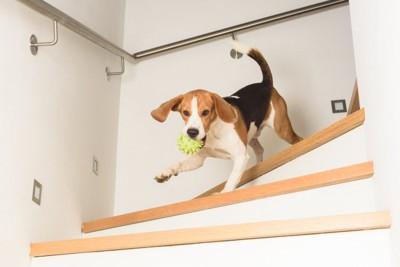階段を全力疾走する犬