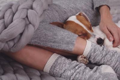 座っている飼い主の足元で眠る犬