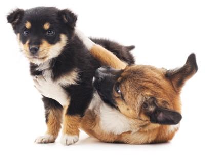白い犬と黒と茶色の犬