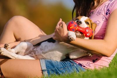 飼い主に抱かれておもちゃで遊ぶ犬