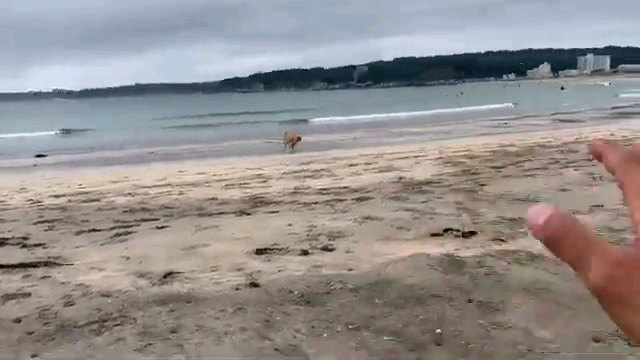 遠くにいる犬と人の手