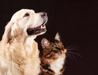 凛々しい犬と猫