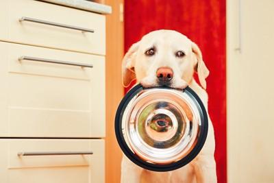 食器を咥えて座っている犬