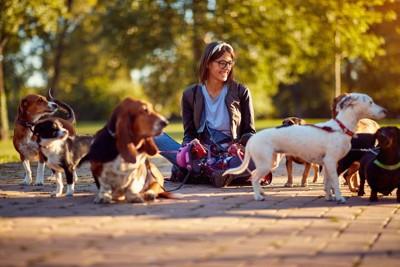 複数の犬を連れた女性