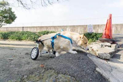 車椅子とコーギー